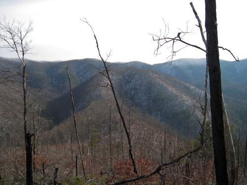 Big Pine Ridge
