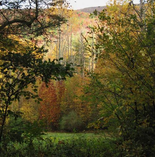 Deer browse field near Spivey Gap