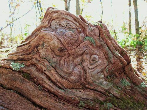 Gnarley Log found on Big Bald